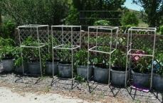 PVC cages 3